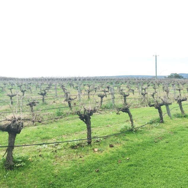 Lancaster vineyard.JPG